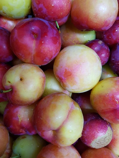 plum for analysis put all