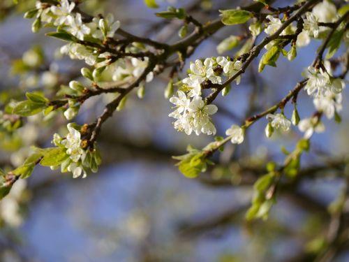 plum branch plum branch