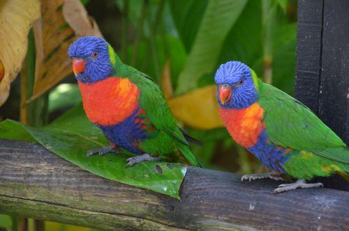 plumage bird parrot