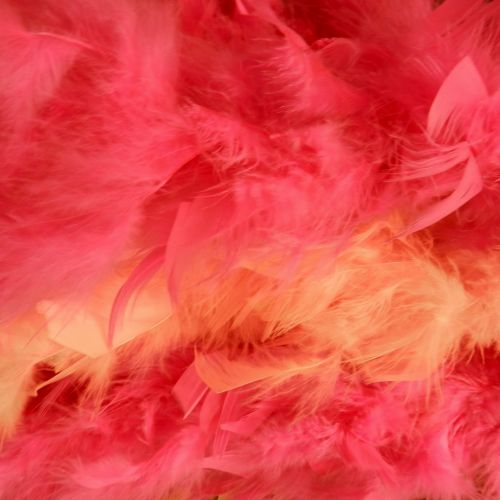 Feathers (5)