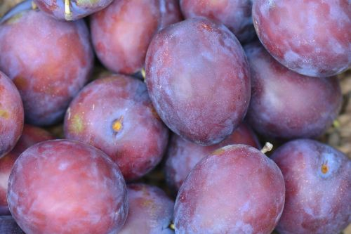 plums fruit president plums