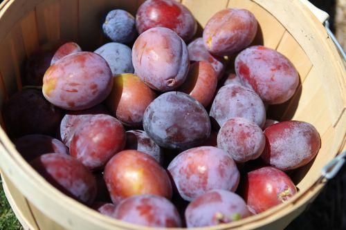 plums fruit harvest
