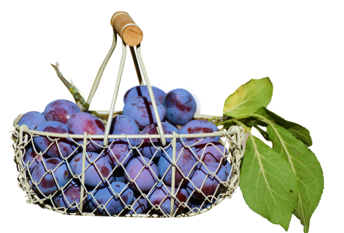 plums in the basket fruit isolated