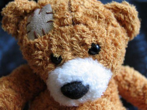 plush teddy bear teddy bear injury