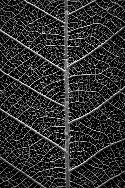 ply  black and white  nature