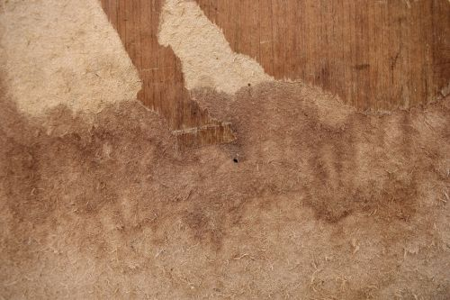 Plywood Decay 2