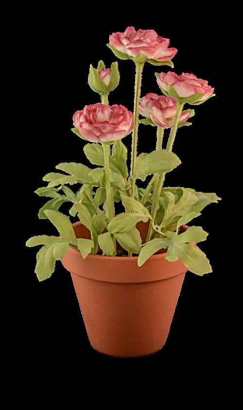 transparent transparent background flowerpot