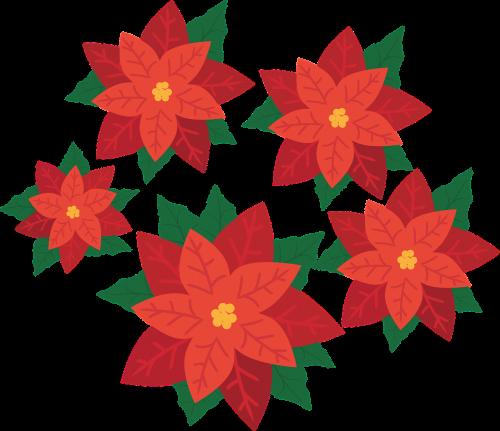 poinsettia flower plant
