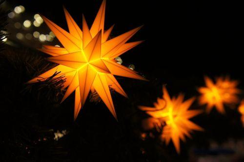 poinsettia advent christmas
