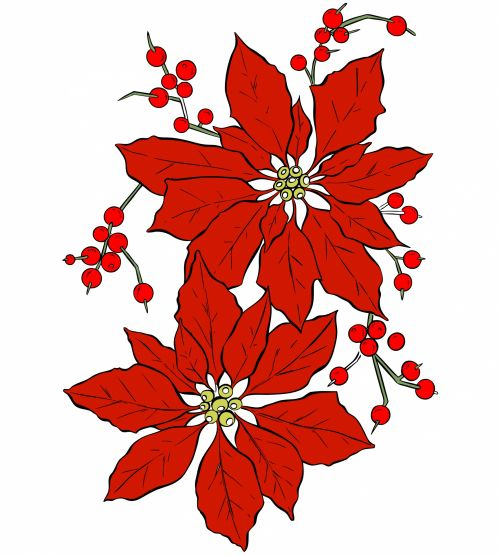 Poinsettia Flower For Christmas
