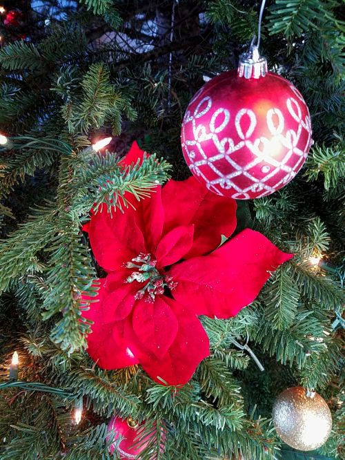 Poinsettia Flower In Christmas Tree