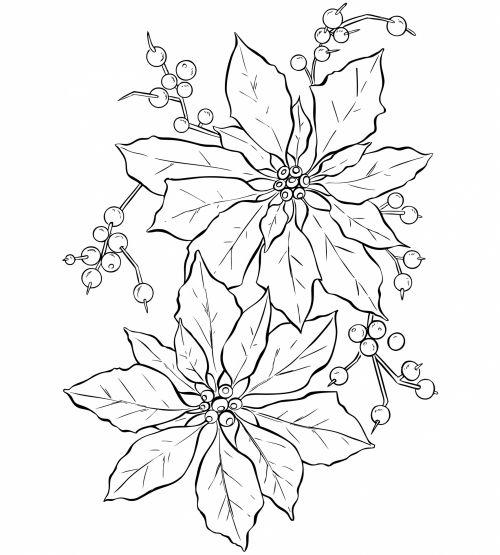 Poinsettia Flower Line Art