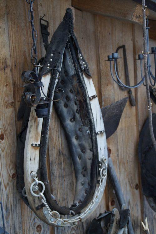 pointed collar collar horse