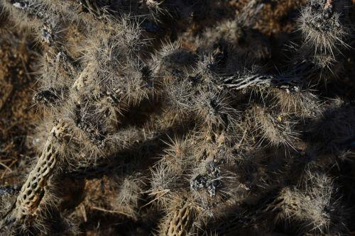 Pointy Desert Plant