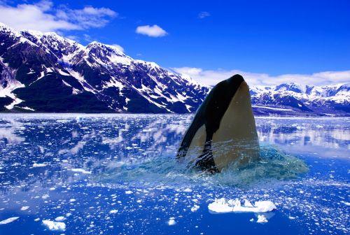 polar ice winter