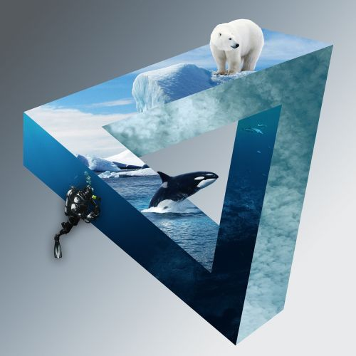 polar bear divers wal
