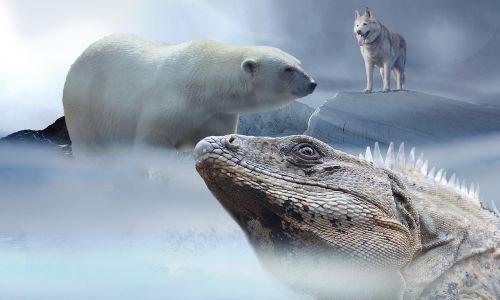 polar bear husky iguana