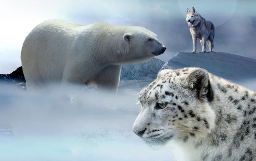 polar bear husky leopard