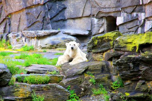 polar bear bear enclosure