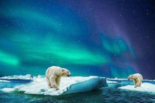 polar bear glass bear