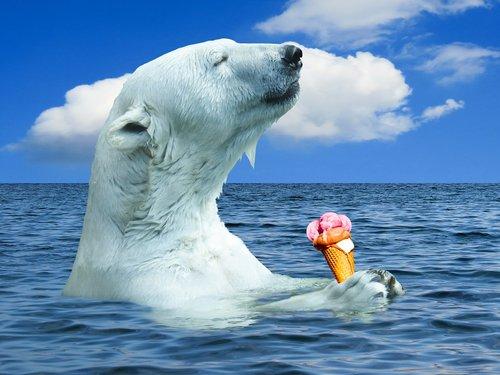 polar bear  animal  predator