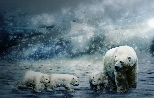 polar bear  animal world  wild animal