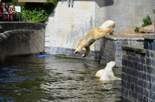 polar bear jump pike jump