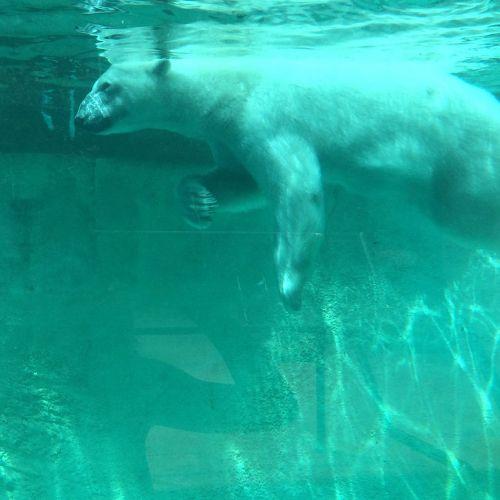 polar bear zoo tank