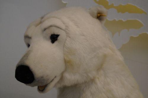polar bear bear white