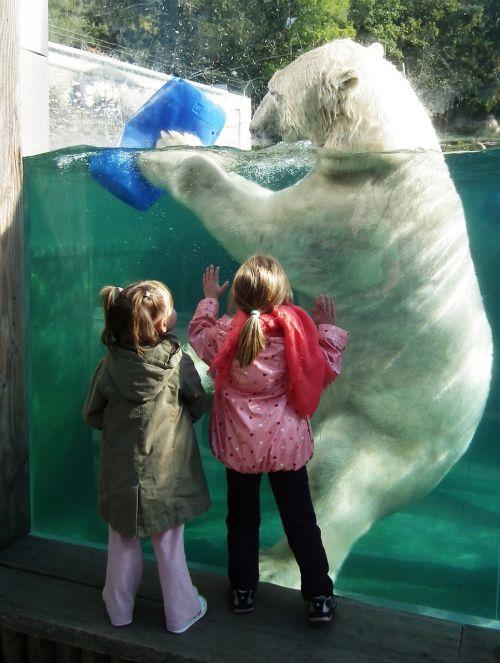 polar bear large white