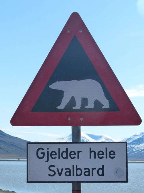 polar bears caution spitsbergen