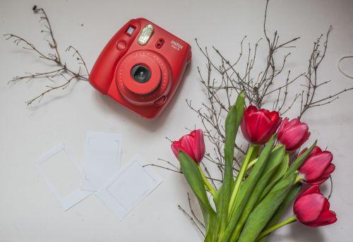 polaroid camera tulip