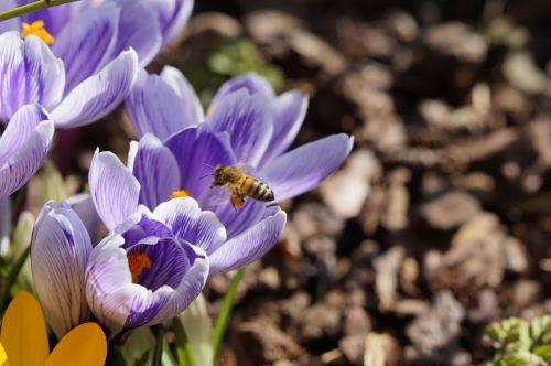 pollen bee collect pollen