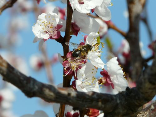 pollination bee flower