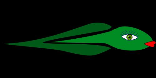 polliwog tadpole frog