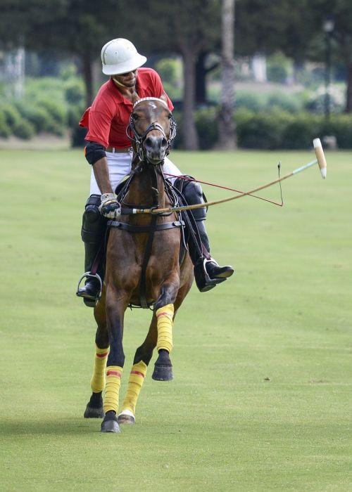 polo sport horse