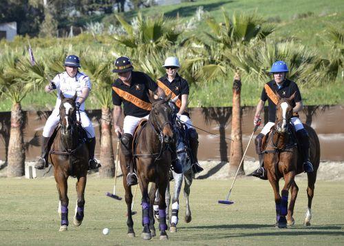 polo horse field