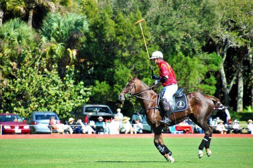 polo polo horse sport