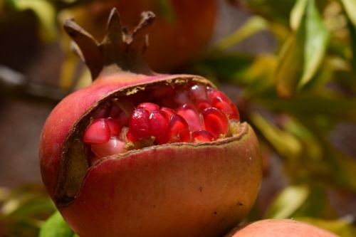 pomegranate sweet delicious