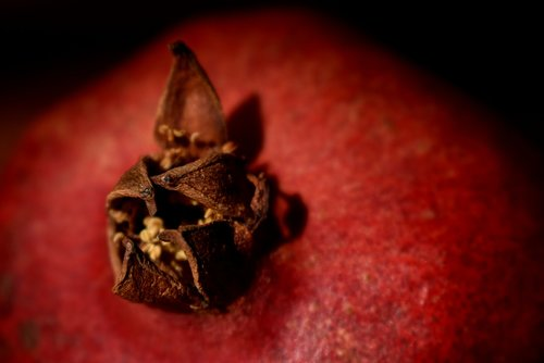 pomegranate  macro  fruit