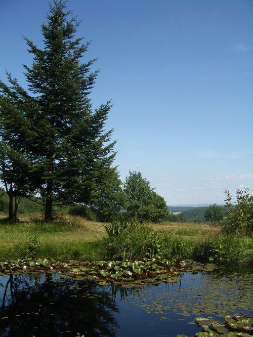 tvenkinys,teichplanze,pelkių augalas,ežeras pakilo,vanduo