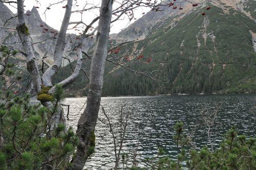 pond mountains tree