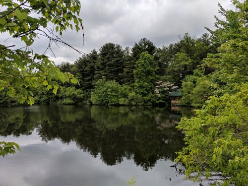 pond trees outdoors