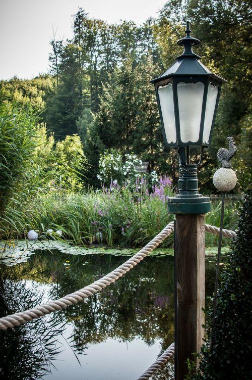 tvenkinys,lempa,teichplanze,augalas,sodo tvenkinys,medžiai,veidrodis,vanduo