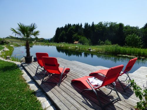 pond swimming pond paradise
