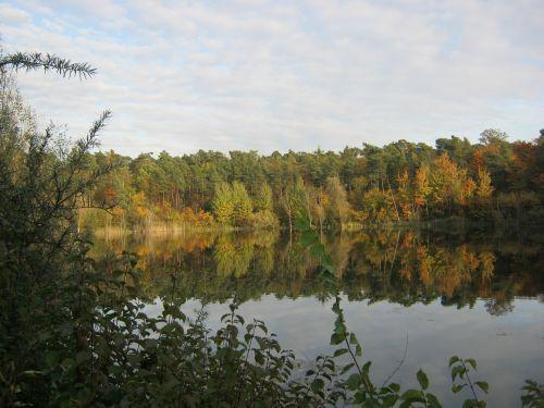 pond leaves emerge