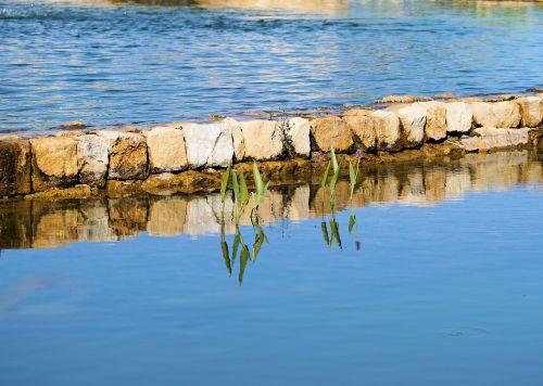 tvenkinys,vanduo,gamta,vandens augalai,žalias,siena,teichplanze