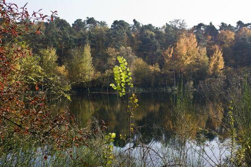 pond autumn bright