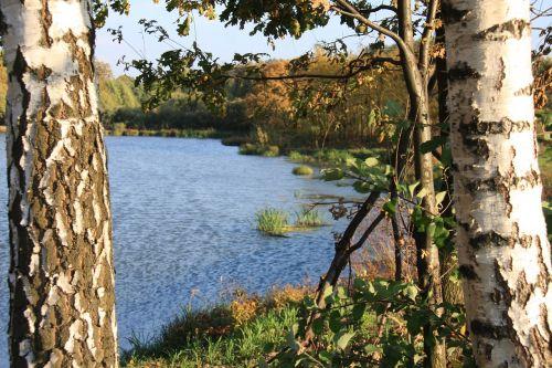 pond birch water
