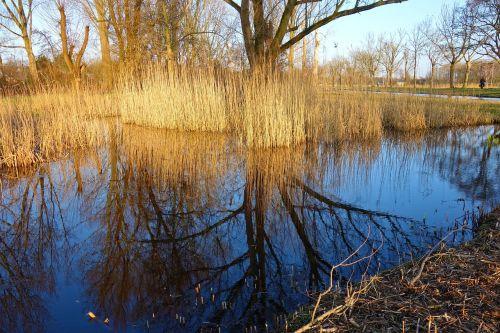 pond water reeds